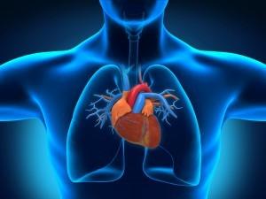 Tachicardia: l'apparato cardiocircolatorio